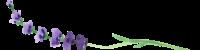 Lavender 10